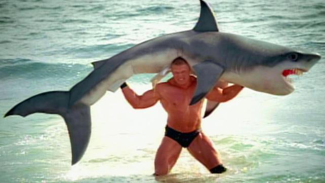 For no reason at all - here's a picture of Brock Lesnar lifting a shark